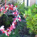 Christmas Fabric & Wire Wreath